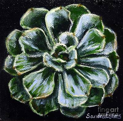 Colorful Succulent Art Print by Sandra Estes