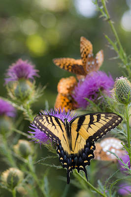 Photograph - Colorful Summer Butterflies by Lori Coleman