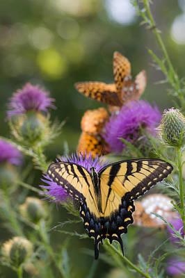 Colorful Summer Butterflies Art Print by Lori Coleman