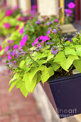 Photograph - Colorful Summer Flowers In Window Box by George Sheldon
