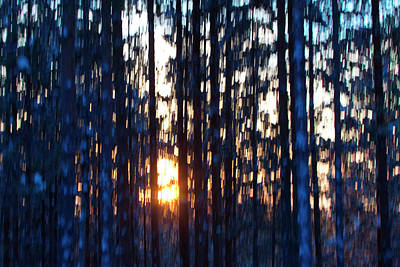 Photograph - Colorful Sunset In A Pine Forest - Motion Blur by Intensivelight