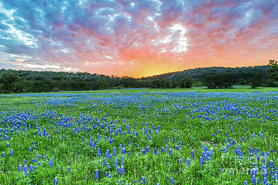 Springtime Photograph - Colorful Sunset Over Bluebonnets by Tod and Cynthia Grubbs