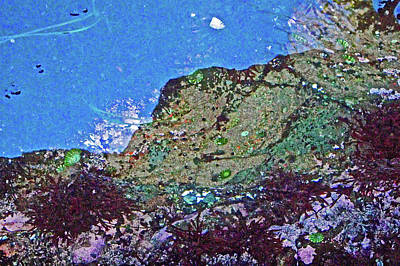 Photograph - Colorful Tide Pool In Salt Creek Recreation Area On Olympic Peninsula, Washington  by Ruth Hager
