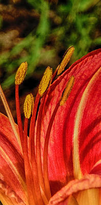 Photograph - Colorful Tiger Lily by Judy Hall-Folde