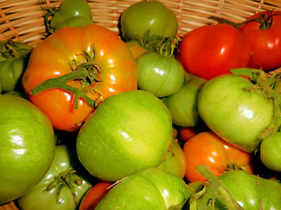 Colorful Tomatoes 2 Art Print