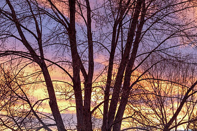 Photograph - Colorful Tree Branches Night by James BO Insogna
