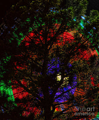 Photograph - Colorful Tree by James BO Insogna
