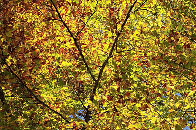 Photograph - Colorful Tree Leaves In Autumn by Elenarts - Elena Duvernay photo