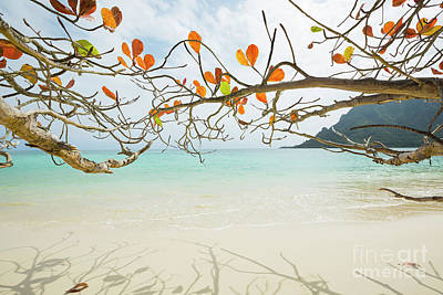 Photograph - Colorful Tree North Shore by Charmian Vistaunet