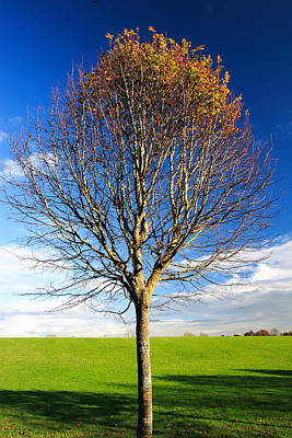 Photograph - Colorful Tree  by Pierre Leclerc Photography
