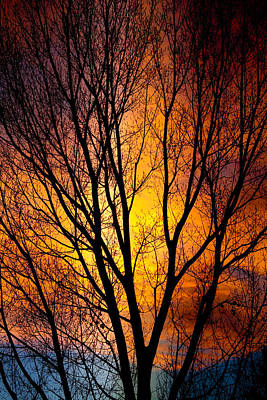 Colorful Tree Silhouettes Art Print by James BO  Insogna