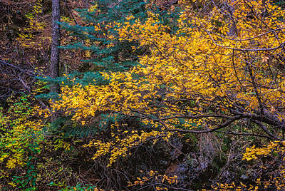 Photograph - Colorful Trees Along The Creek Bank by John Brink
