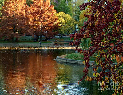 Photograph - Colorful Trees Boston by Haleh Mahbod