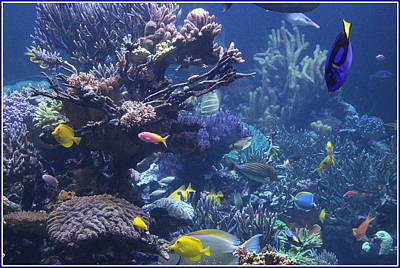 Photograph - Colorful Tropical Fish And Coral Reefs by Dora Sofia Caputo Photographic Art and Design