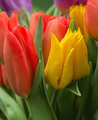 Photograph - Colorful Tulip Bouquet by Arlene Carmel
