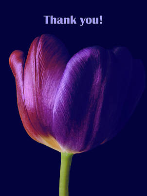 Photograph - Colorful Tulip Macro Thank You by Johanna Hurmerinta