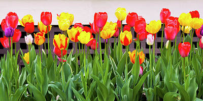 Photograph - Colorful Tulips by Alan L Graham