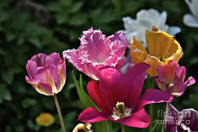 Photograph - Colorful Tulips by Tatiana Travelways