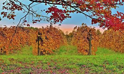 Photograph - Colorful Vineyard Sunset by Frozen in Time Fine Art Photography