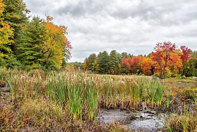 Photograph - Colorful Webster Bog by Betty Pauwels