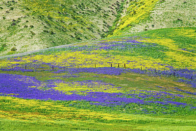 Photograph - Colorful Wildflower Carpet by Lynn Bauer