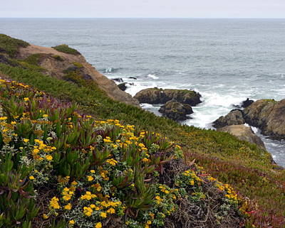 Photograph - Colorful Wildflowers On Bodega Head by Carla Parris