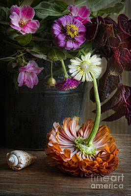 Photograph - Colorful Zinnias by Elena Nosyreva