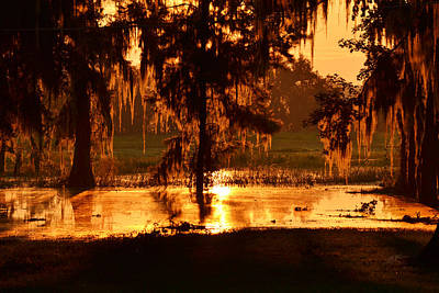 Photograph - Coloring The Swamp With Sunrise by rd Erickson