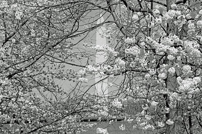 Photograph - Colorless Cherry Blossoms And Washington Monument by Cora Wandel