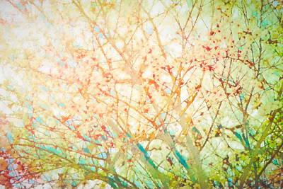 Photograph - Colors 158 by Pamela Cooper