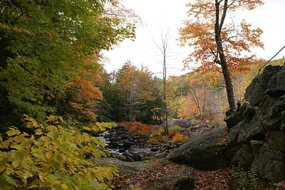 Photograph - Colors Along The Stream by Lois Lepisto