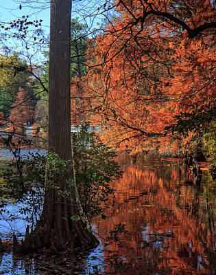 Art Print featuring the photograph Colors And Reflections At Trap Pond by Robert Pilkington