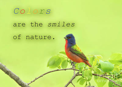 Photograph - Colors Are Smiles Of Nature by Sari ONeal