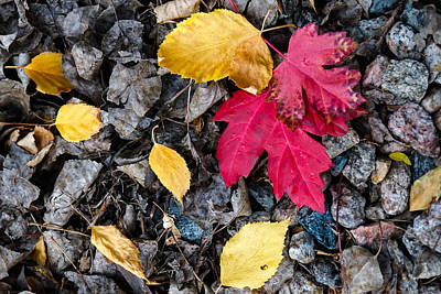 Photograph - Colors In Fall by Monte Stevens