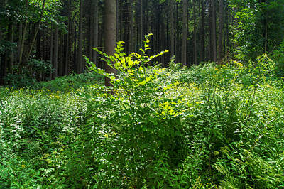 Colors Of A Forest In Vogelsberg Art Print