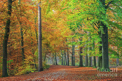 Photograph - Colors Of An Autumn Forest  by IPics Photography