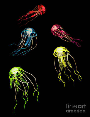 Jelly Photograph - Colors Of Aquatic Life by Jorgo Photography - Wall Art Gallery