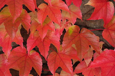 Photograph - Colors Of Autumn 1 by Jenny Rainbow