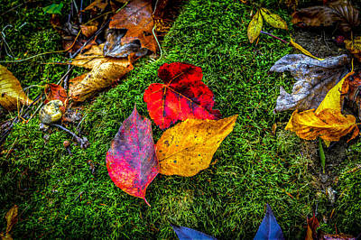 Photograph - Colors Of Autumn by Francisco Gomez