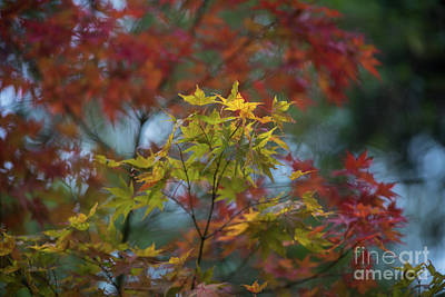 Photograph - Colors Of Autumn In The Arboretum by Mike Reid