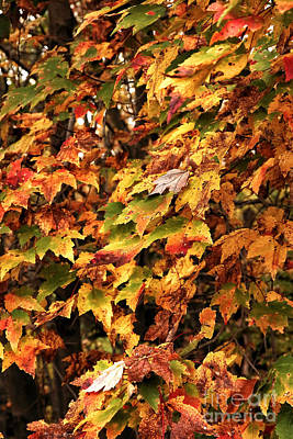 Colors Of Autumn Print by John Rizzuto