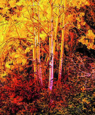 Photograph - Colors Of Autumn Past by Nancy Marie Ricketts