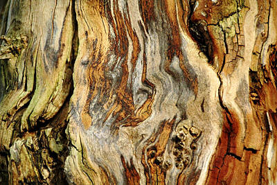 Photograph - Colors Of Bark by Debbie Oppermann