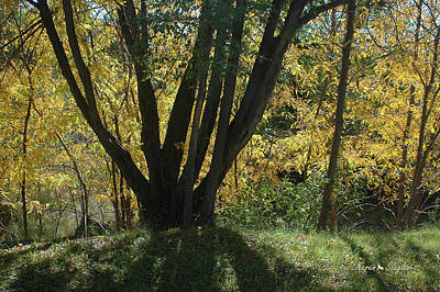 Photograph - Colors Of Fall 2 by Karen Slagle