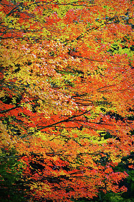 Photograph - Colors Of Fall by JAMART Photography