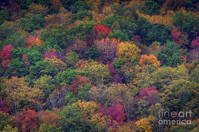 Photograph - Colors Of Fall by Joan McCool