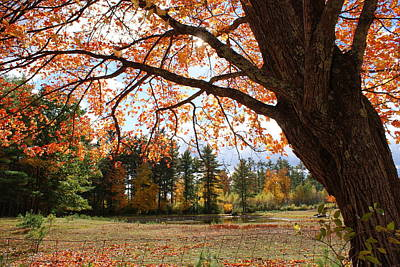 Photograph - Colors Of Fall by Lois Lepisto
