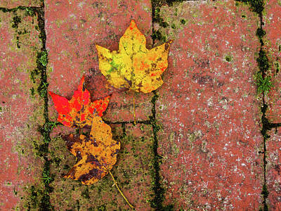 Photograph - Colors Of Fall by Randy Sylvia