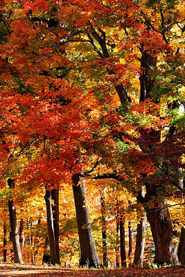 Stratford Photograph - Colors Of Fall by William Selander