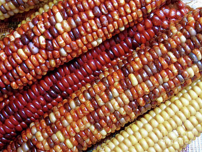Photograph - Colors Of Indian Corn by D Hackett